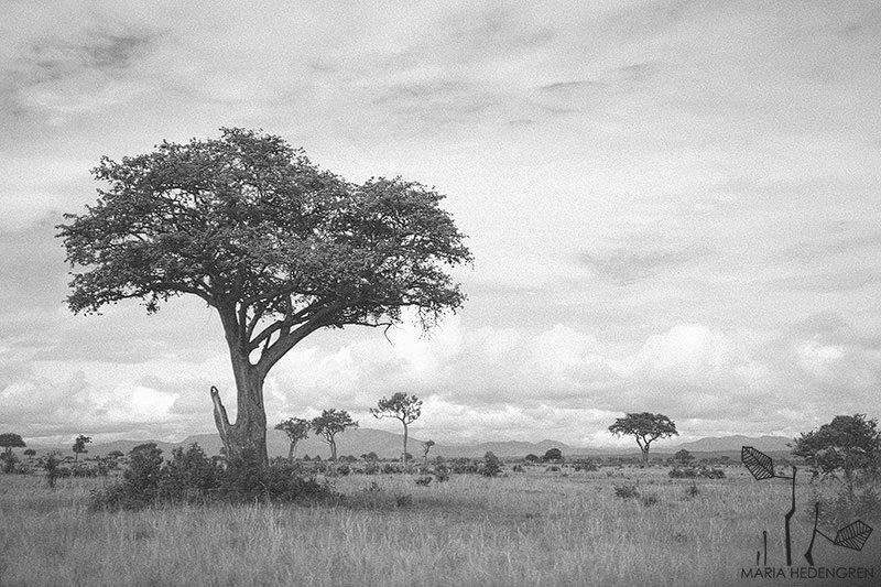 Safari Wedding Photographer