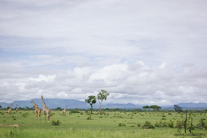 Tanzania Wedding Photographer