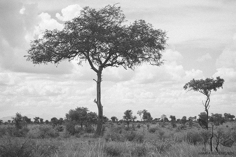 Safari photographer
