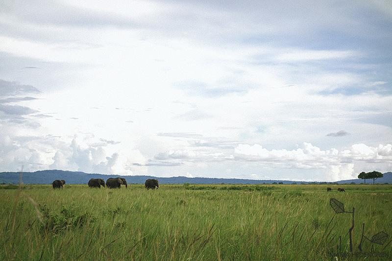 Safari Destination Wedding