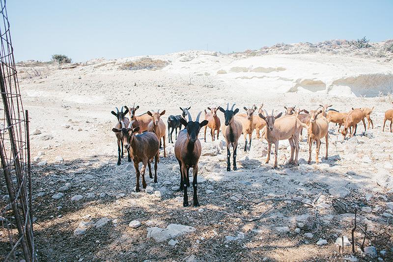 Summer Travels Greece 015