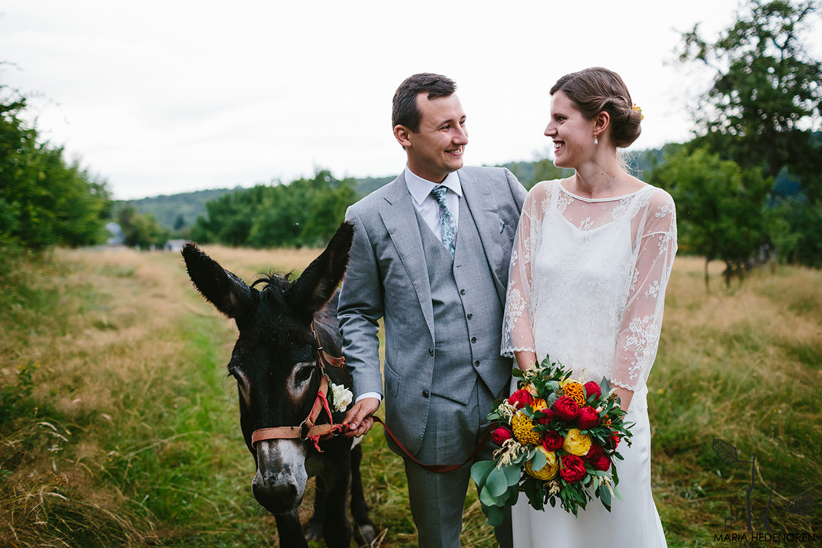 donkey wedding