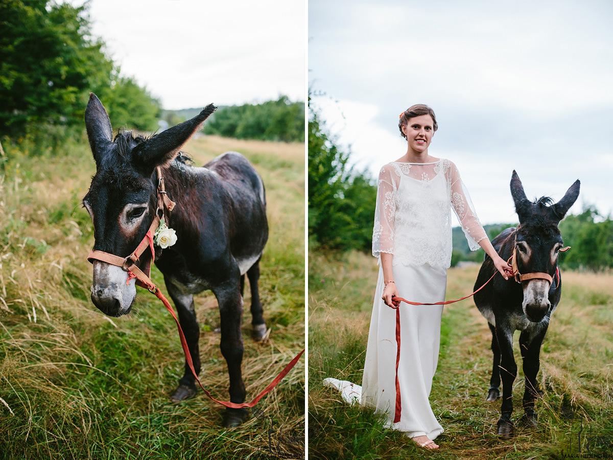 donkey bride