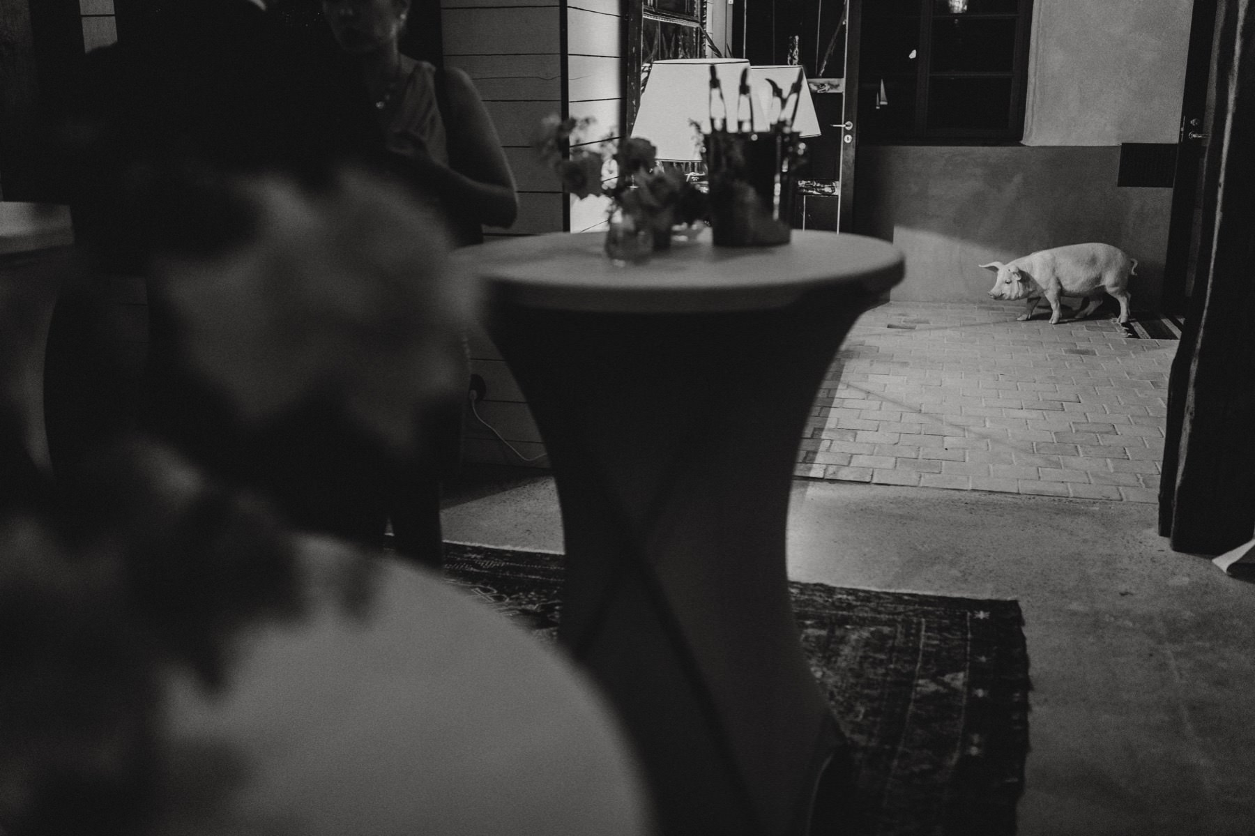 pig at wedding