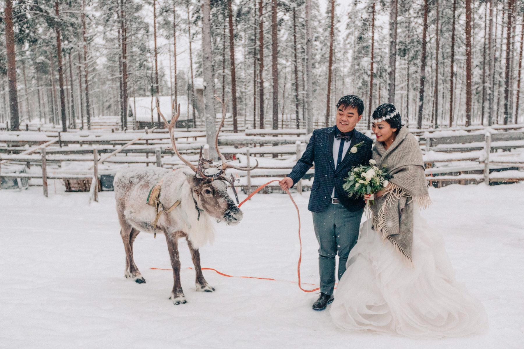 reindeer ride Lapland