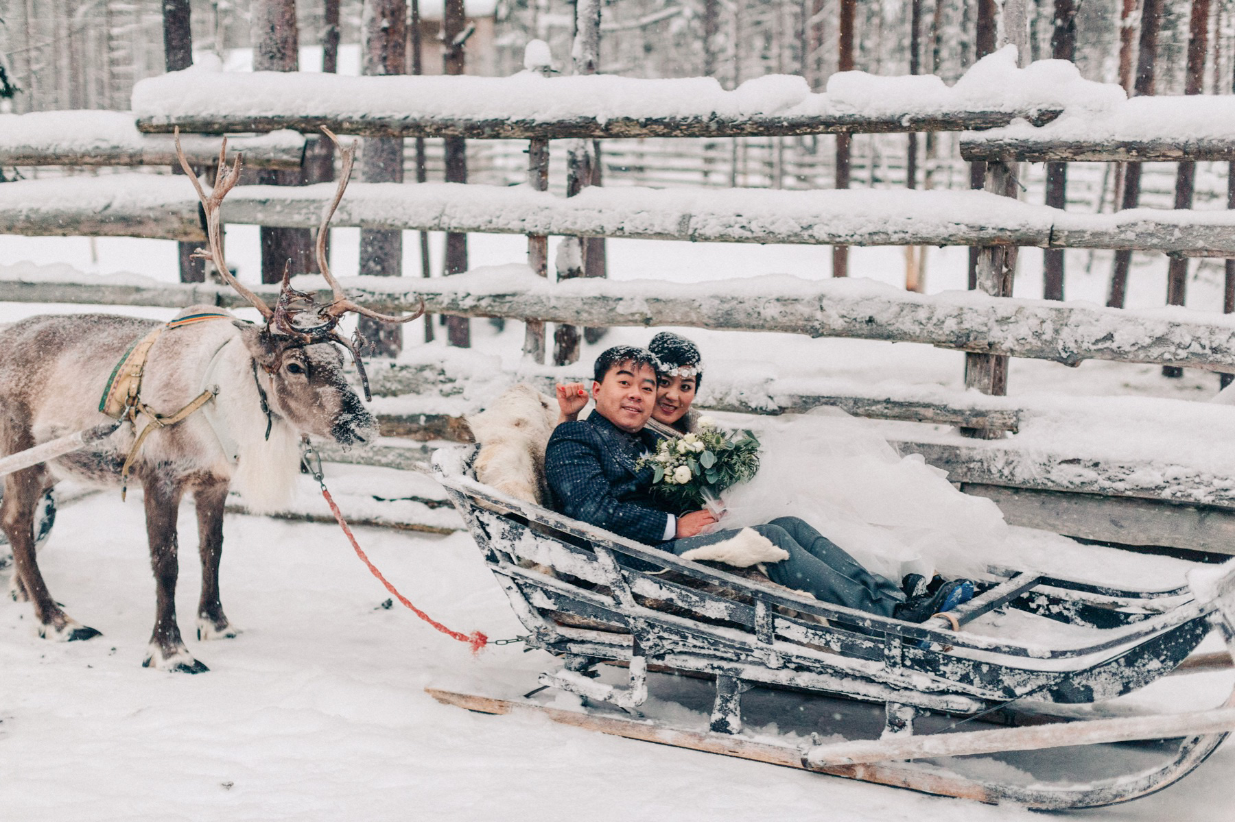 meet reindeer in Lapland