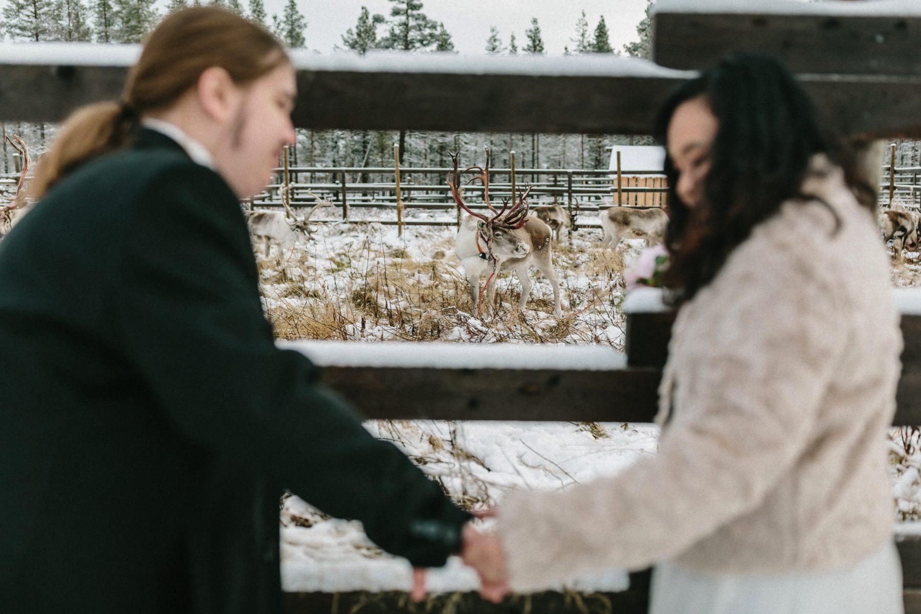 Lapland reindeer wedding