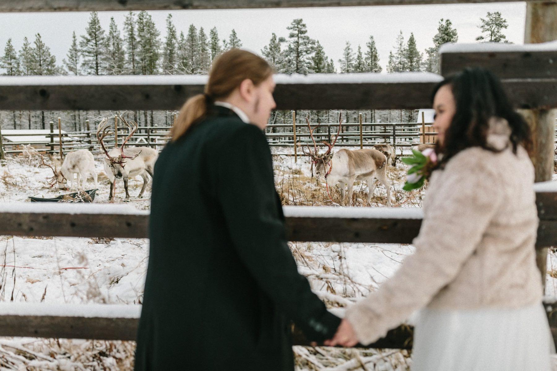 reindeer photo session